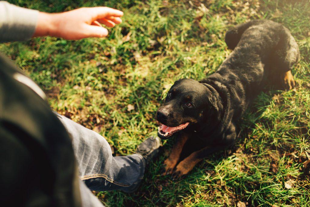 Pet Locate Investigation